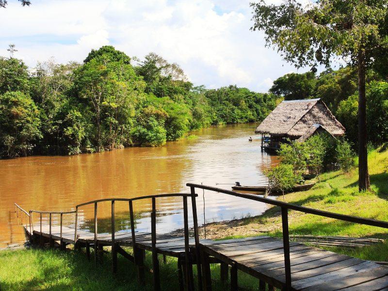 manu amazon river by eco path trek
