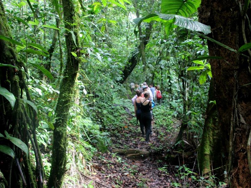 manu amazon rainforest tour by andean path trek